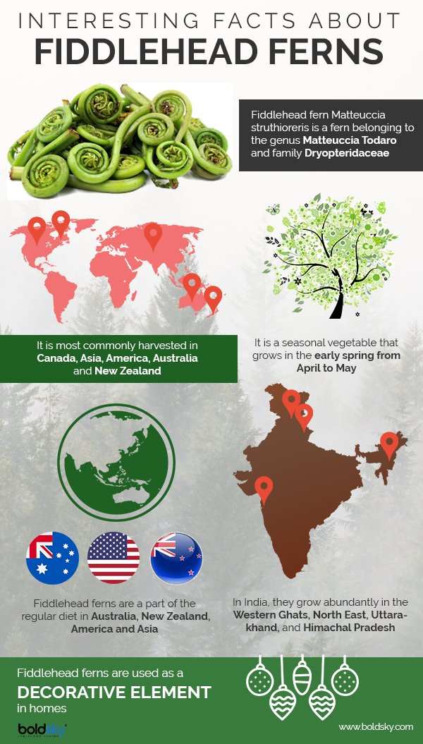 fiddlehead ferns health benefits infographic