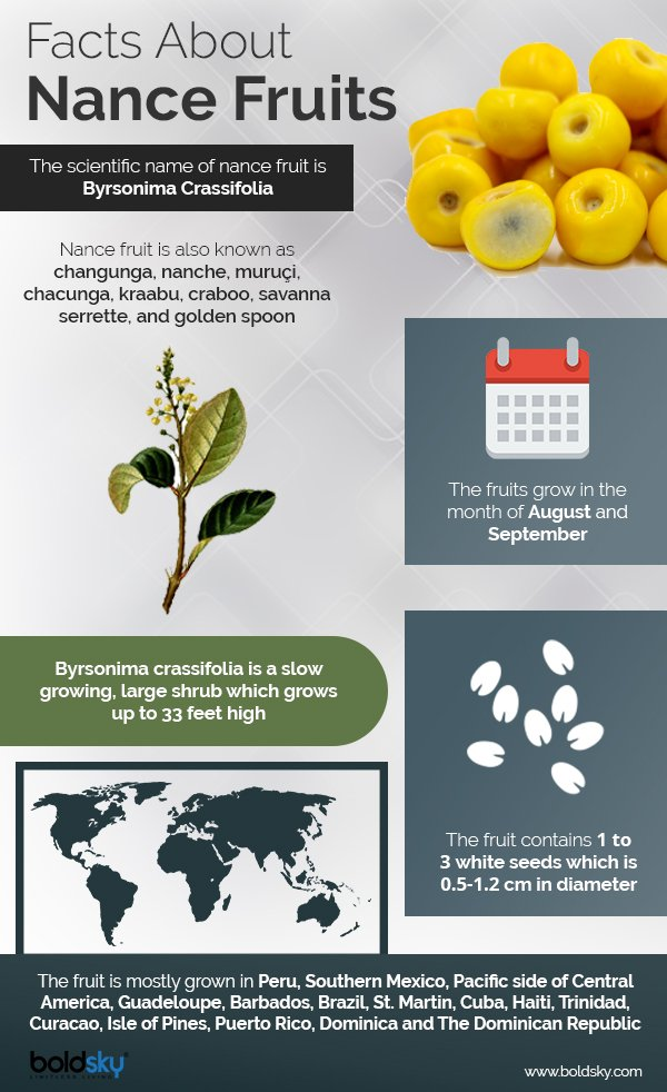 nance fruits health benefits infographic