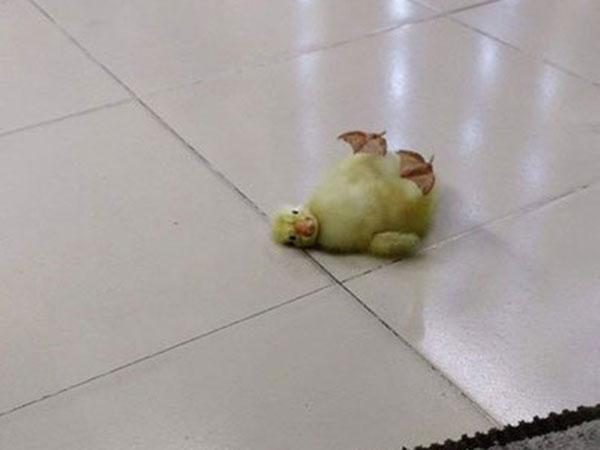 Ilustrasi anak bebek yang telah menetas