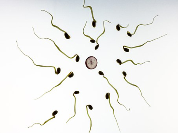 How To Boost Your Sperm Count Naturally
