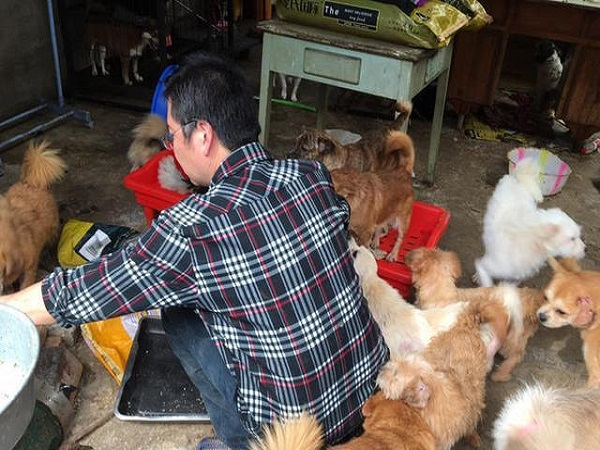 Man Runs Into Debt After He Adopted 300 Dogs In 2 Years
