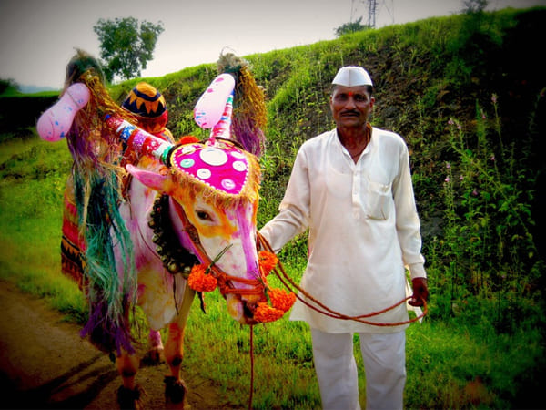 Bail Pola Festival 2020: Significance And How It Is Celebrated ...