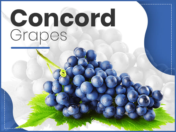 7 Health Benefits Of Concord Grapes