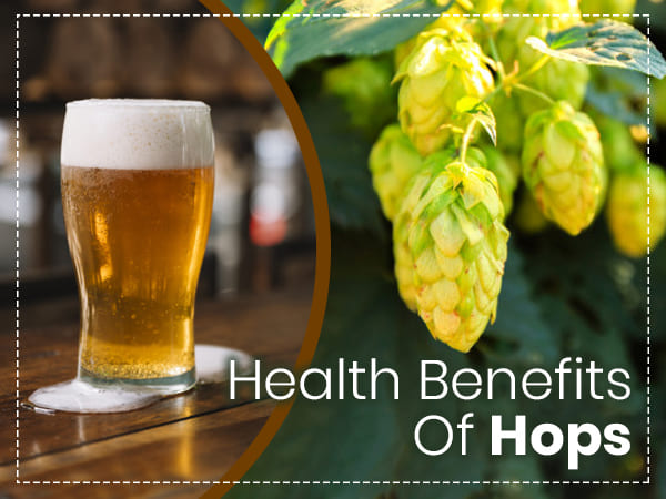 19 Amazing Health Benefits Of Hops