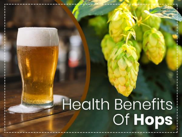 19 Amazing Health Benefits Of Hops