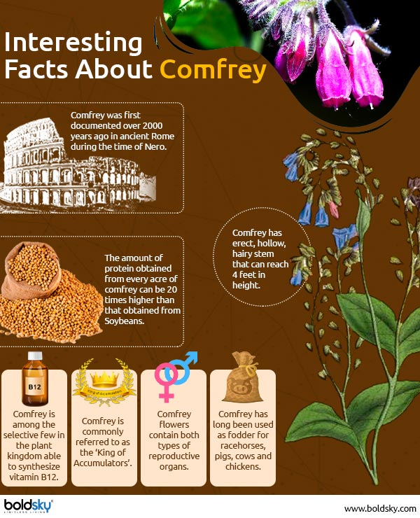 interesting facts about comfrey