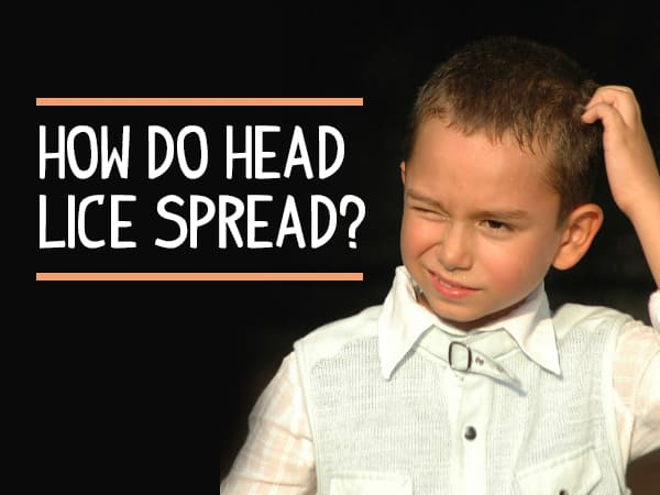 Head Lice: How Do They Spread? Symptoms, Treatment and Prevention
