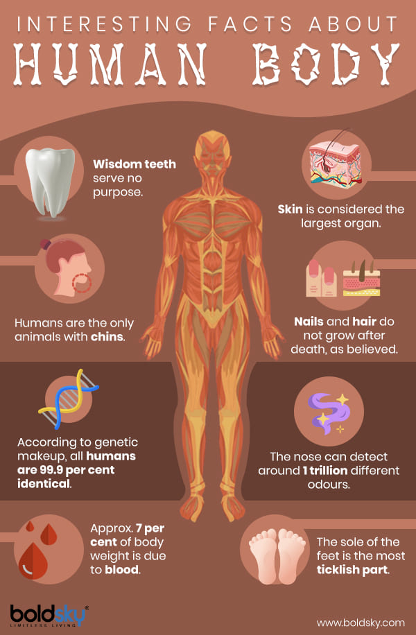 gk questions and answers about human body