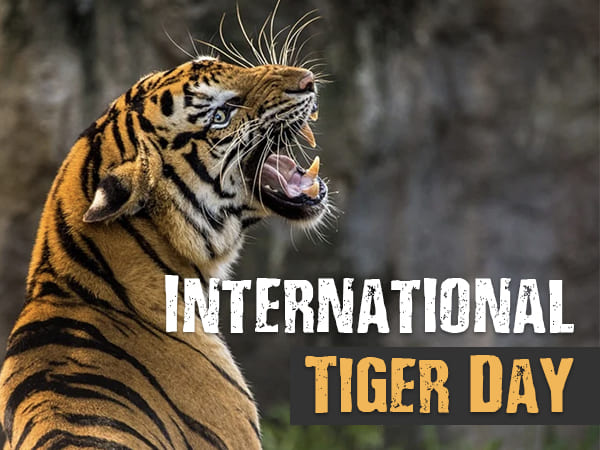 International Tiger Day 2021: Facts About Tigers - Boldsky.com