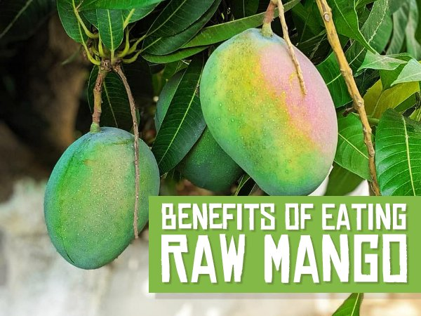 10 Reasons Why You Should Eat Raw Mangoes; Side Effects And Healthy Recipes