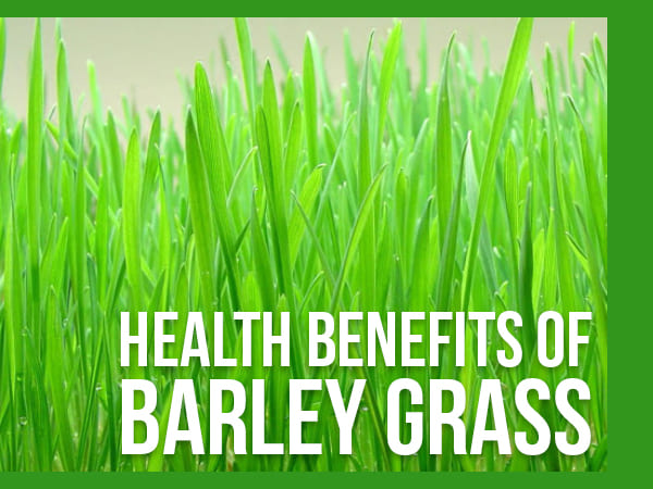 16 Amazing Health Benefits Of Barley Grass