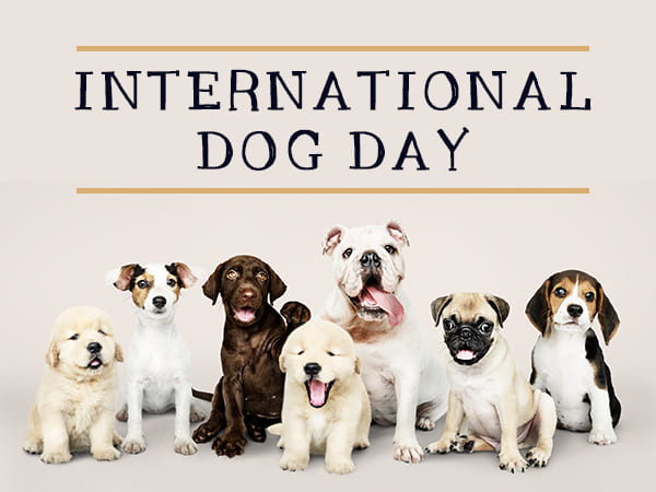 International Dog Day 2021: History And How To Celebrate This Day -  Boldsky.com
