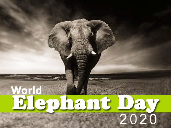 World Elephant Day 2020: 12 Interesting Facts About Elephants On This Day