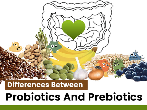 Probiotics And Prebiotics: What's the Difference Between The Two And Why Are They Important?