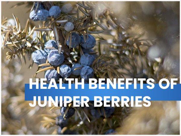 6 Lesser-Known Health Benefits Of Juniper Berries