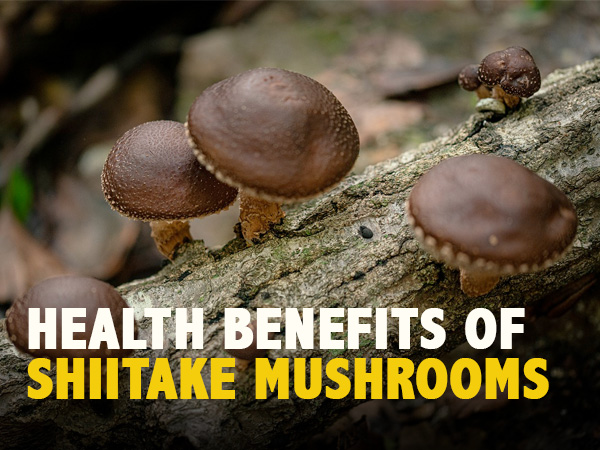 Shiitake Mushrooms: Nutrition, Health Benefits And Ways To Eat