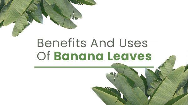 Banana Leaves: Medicinal Benefits And Traditional Uses