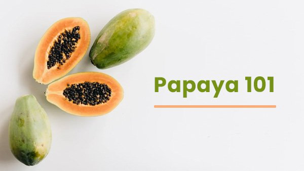 Papaya 101: Everything You Need To Know About The Fruit