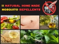 11 Natural Homemade Mosquito Repellents
