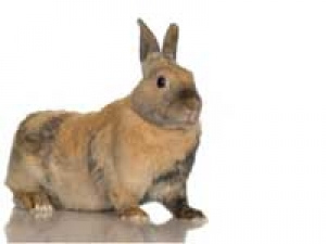 Savior Pets House Fire Rabbit
