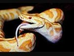 Four Months With Snakes