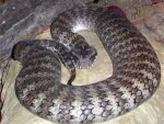 Worlds Most Poisonous Snakes