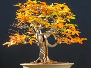 Best Bonsai Plants