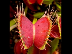 Grow Carnivorous Plants Home Part