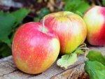 Ten Fruits To Eat Pregnancy