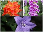 Best Flowers That Grow In Moist Soil