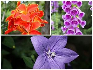 Best Flowers That Grow In Moist Soil