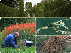 Eight Best Monsoon Gardening Tips
