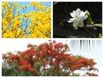 Best Plants To Grow In Monsoon