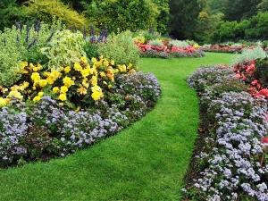 How To Grow Basic Vegetable Garden