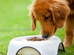 Healthy Foods For Your Dog