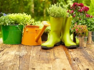 Simple Gardening Tips For Winter