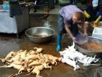 Things To Know About Chinas Yulin Dog Meat Festival