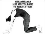 Marjariasana Cat Stretch Pose To Relieve Stress