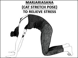 Marjariasana Cat Stretch Pose To Relieve Stress