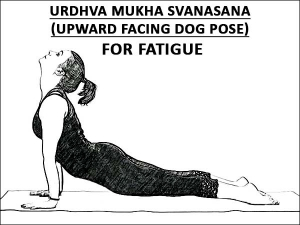 Urdhva Mukha Svanasana Upward Facing Dog Pose For Fatigue