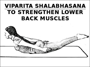 Viparita Shalabhasana To Strengthen Lower Back Muscles