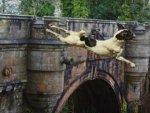 Have You Heard About Dogs Suicide Bridge