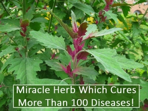 Herb That Can Cure More Than Hundred Diseases