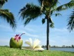 Know What Happens To Your Body If You Drink Coconut Water For Fourteen Days