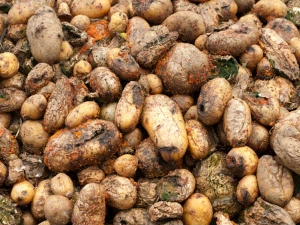 Did You Know Potatoes Can Kill You