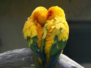Common Health Problems Of Love Birds