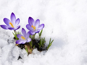 Tips To Protect Your Garden From Frost