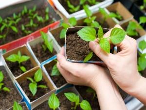 How To Set An Indoor Garden Top 6 Tips