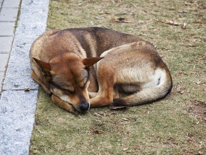 Tips When Adopting A Stray Dog