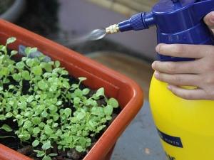 10 Home Made Safe Pesticides For Your Garden Garlic N